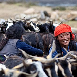 Pomoc dla Tybetu 2